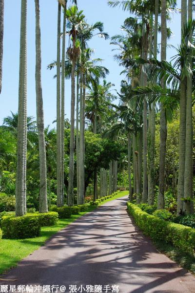 入園就能看到的椰林大道
