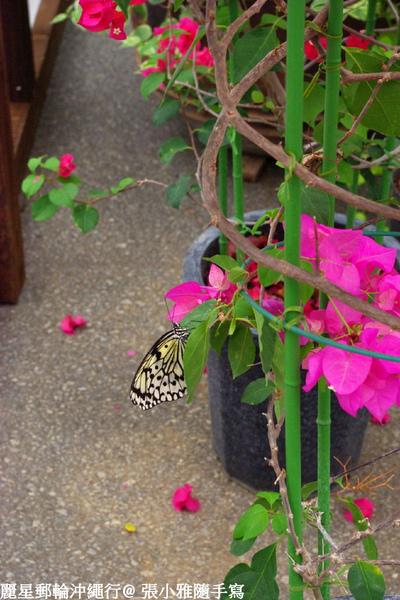 漫天飛舞的蝴蝶