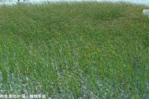 隨風搖曳的水草