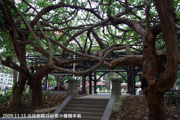 合抱的大樹