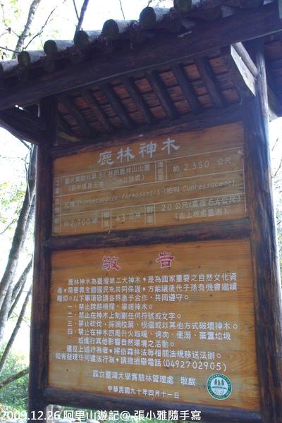 台灣第二大神木-鹿林神木