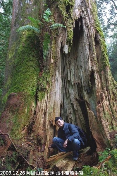 大得驚人的18號巨木