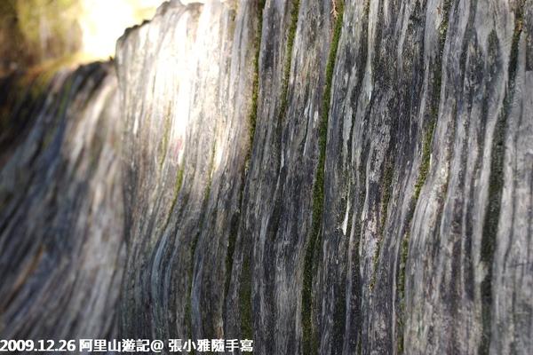 樹皮紋理真美