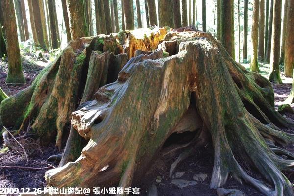 好悲傷的樹根