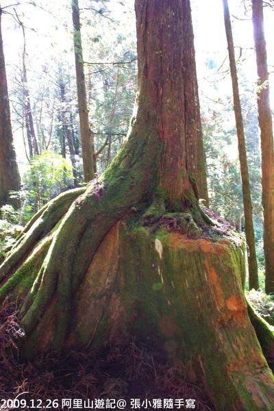 也有種子落在被砍伐的樹根上,延續生命