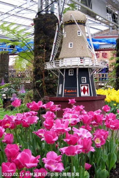 搭上小風車,很有荷蘭風情