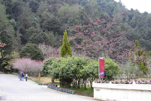 花卉中心外盛開的櫻花