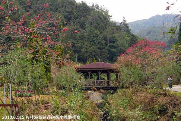 櫻花樹間的涼亭