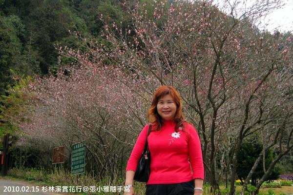 老媽的衣服比櫻花還搶眼!