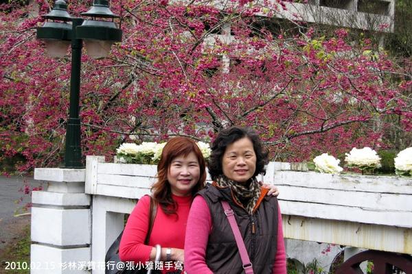 老媽和小姑在盛開的櫻花前來一張