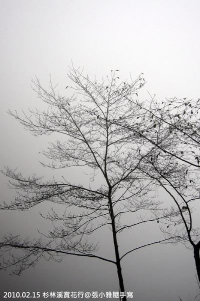只有黑白兩色的起霧景象