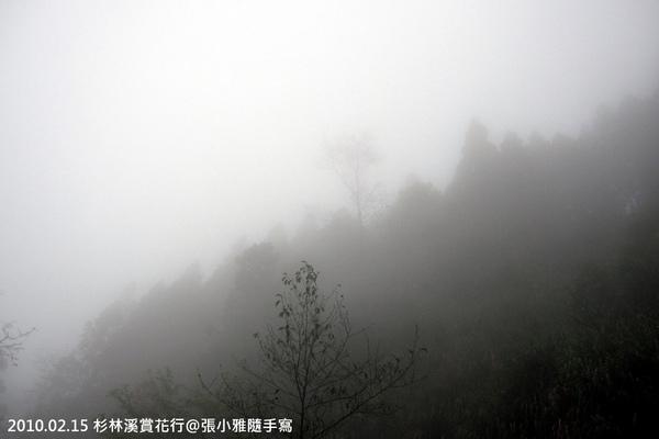 整座山頭壟罩在霧裡