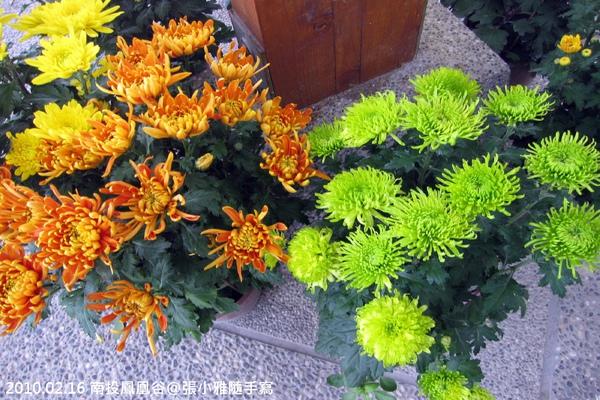 屋簷下的菊花盆栽