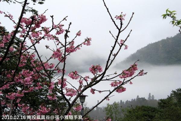 櫻花後是一大片雲海