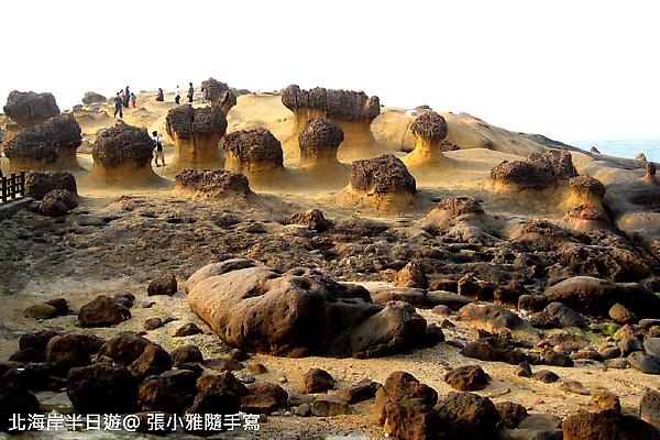 海岸邊各種奇形怪狀的礁岩