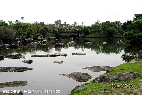 石頭好像浮在水面的鱷魚