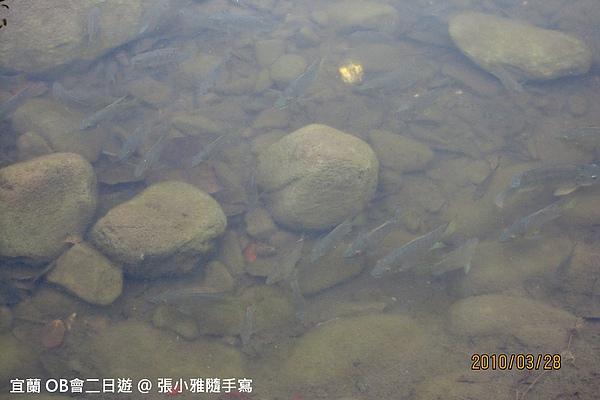 很清澈的池塘,裡頭超多魚的