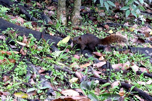 這裡的松鼠不大怕人,不知道是不是因為有人會餵牠們吃東西