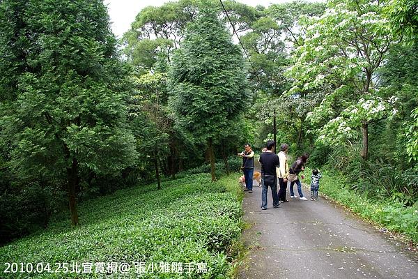 右邊是桐花,左邊是茶樹