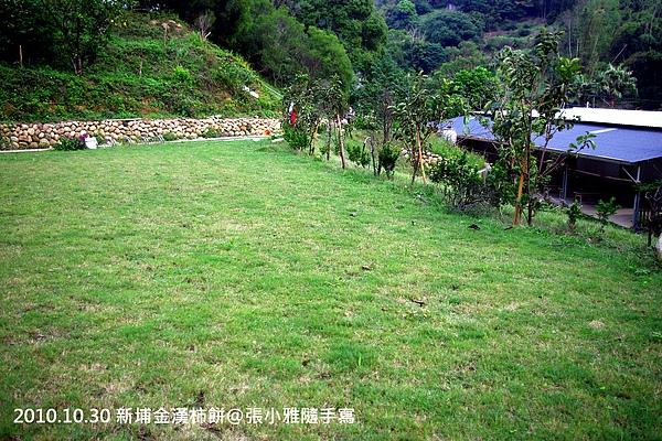 往後山望去是一大片綠色草坪