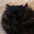 睡相-正在做著吃toro的美夢