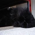 睡在矮桌下, 真舒服