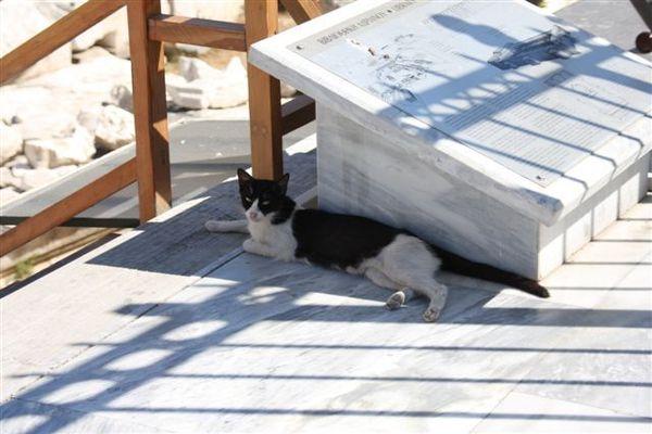 在大理石座陰影下慵懶的貓