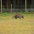 有小袋鼠飼育區