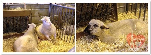 chevre et mouton.jpg