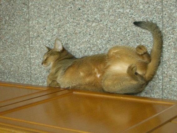 我第一次在客廳睡這樣喔