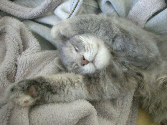 睡翻~~~超可愛