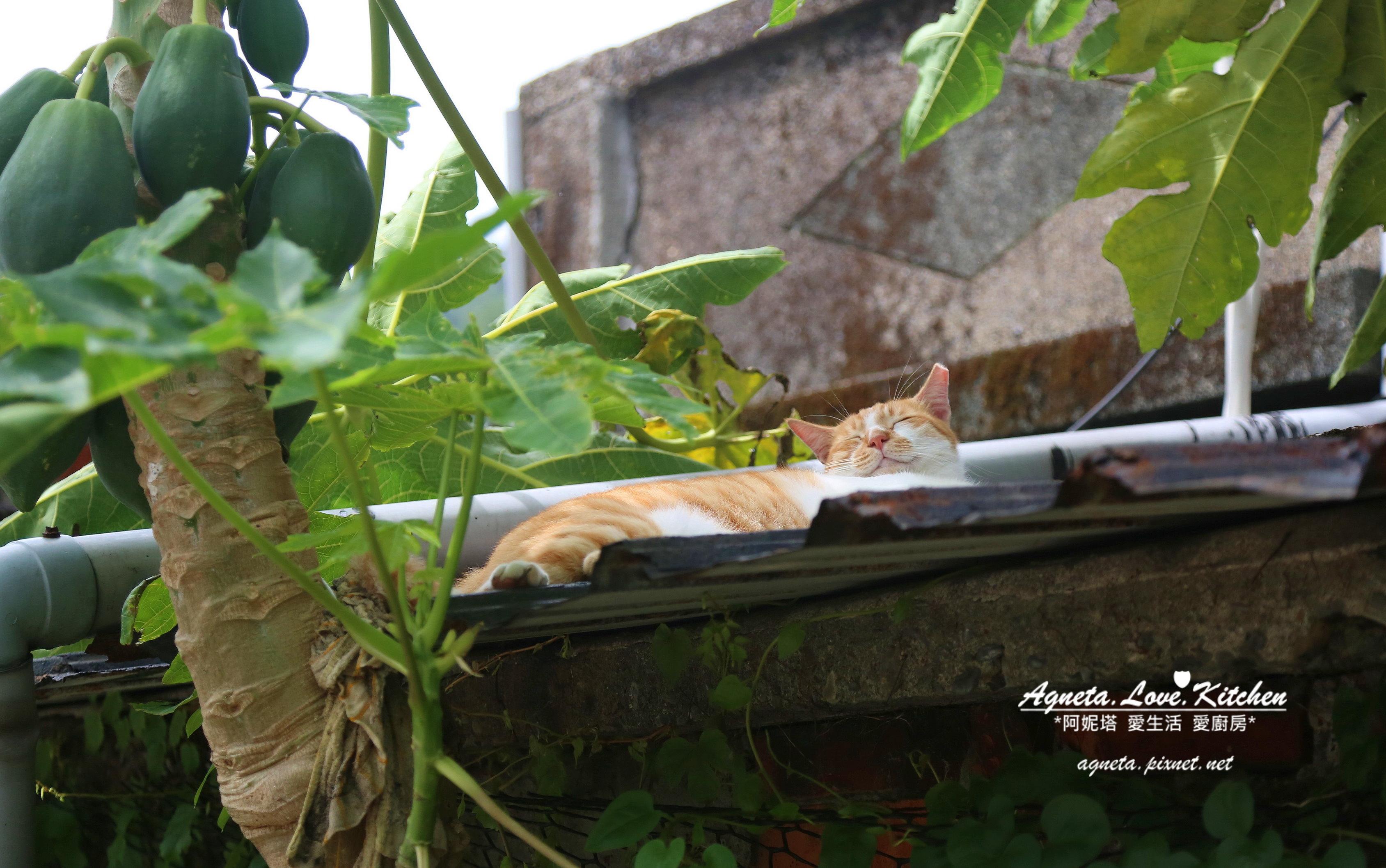 orange sleep cat.jpg