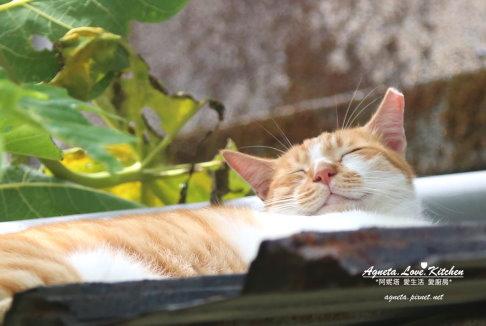 orange sleep cat2.jpg