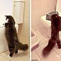 toilet_resize.jpg