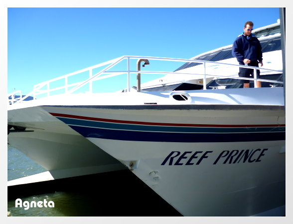 Reef Prince 我們的船