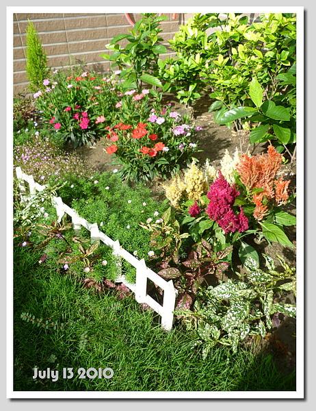 七月的小花園