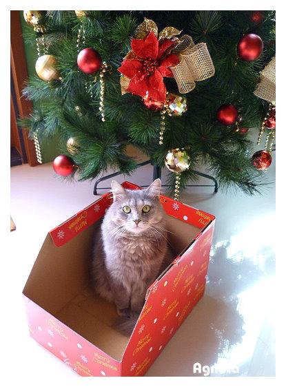 小鳥灰說:聖誕快樂!