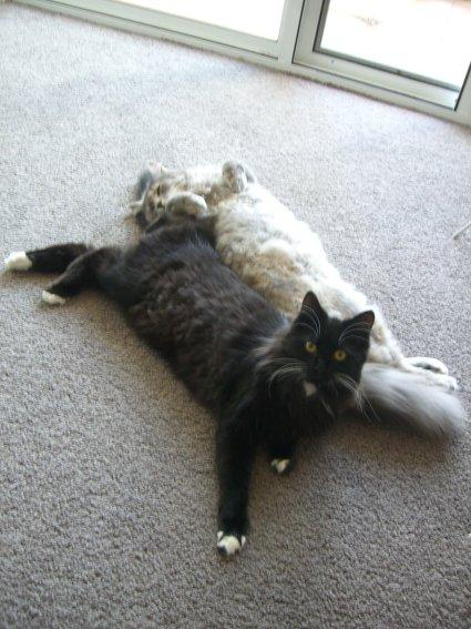 躺在一起的秋灰