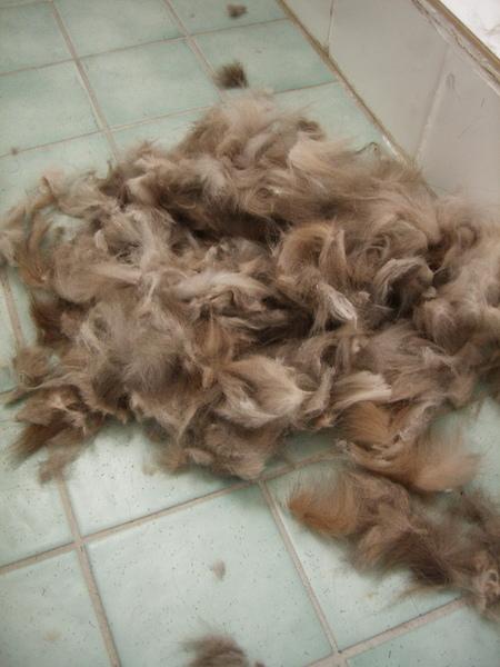 像是剃羊毛一樣