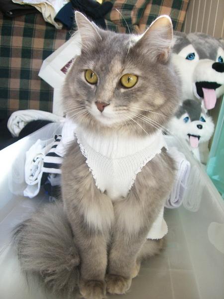 新洋裝~~白色小女僕