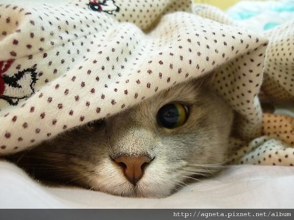 躲在我的睡褲下
