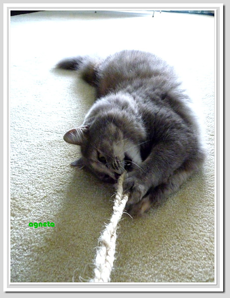 旁邊這根繩子比較好玩