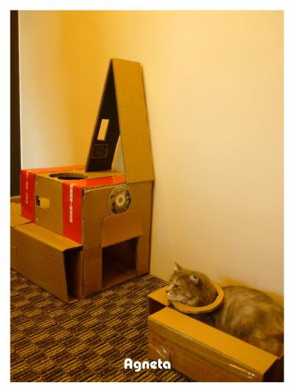 小鳥灰有新玩具 老王做的貓屋