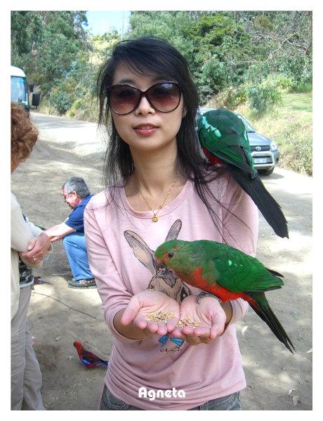 09年在大洋路手餵野生鸚鵡