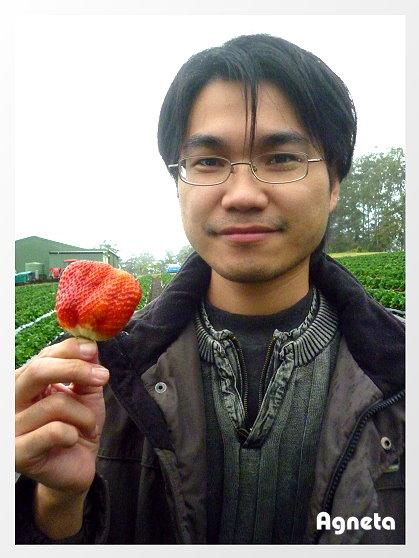 邊採邊吃大草莓 讚