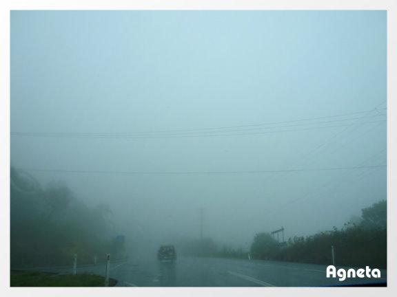 開了好久的車到Monville 昆士蘭的小瑞士 天氣不好 下雨又起大霧
