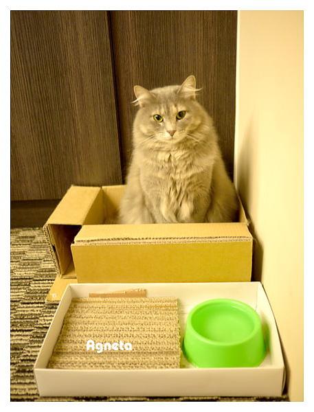 這是一開始的貓抓板