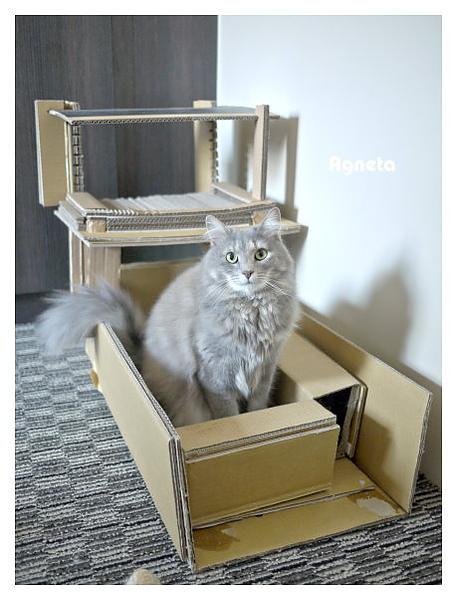 灰鳥號第四代完成~把貓抓柱拿掉,改走簡單(儉樸?)風,不需要的裝飾都去掉