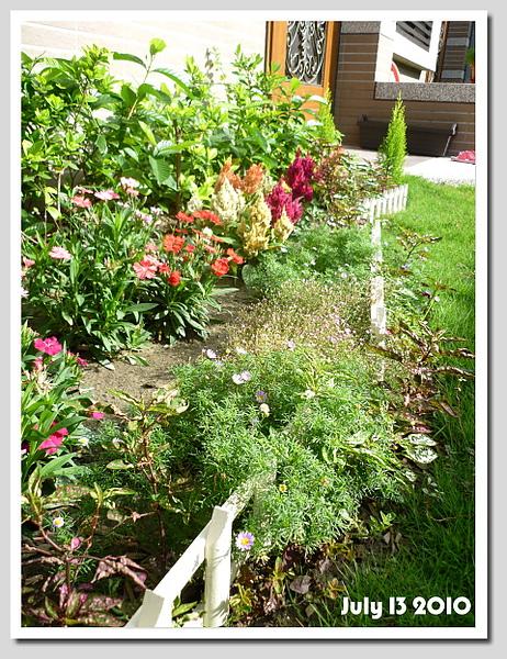 圍籬前面的小花長的更滿囉