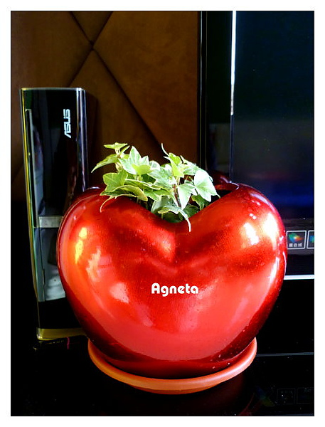 愛心花器移到客廳裡面應景